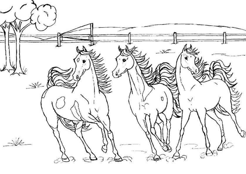 3 pferden ausmalen