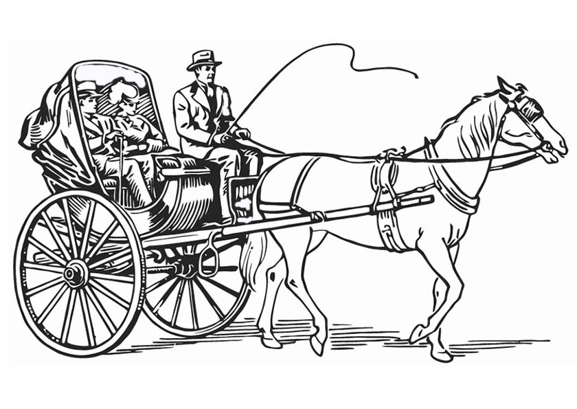 pferde mit kutzen 1