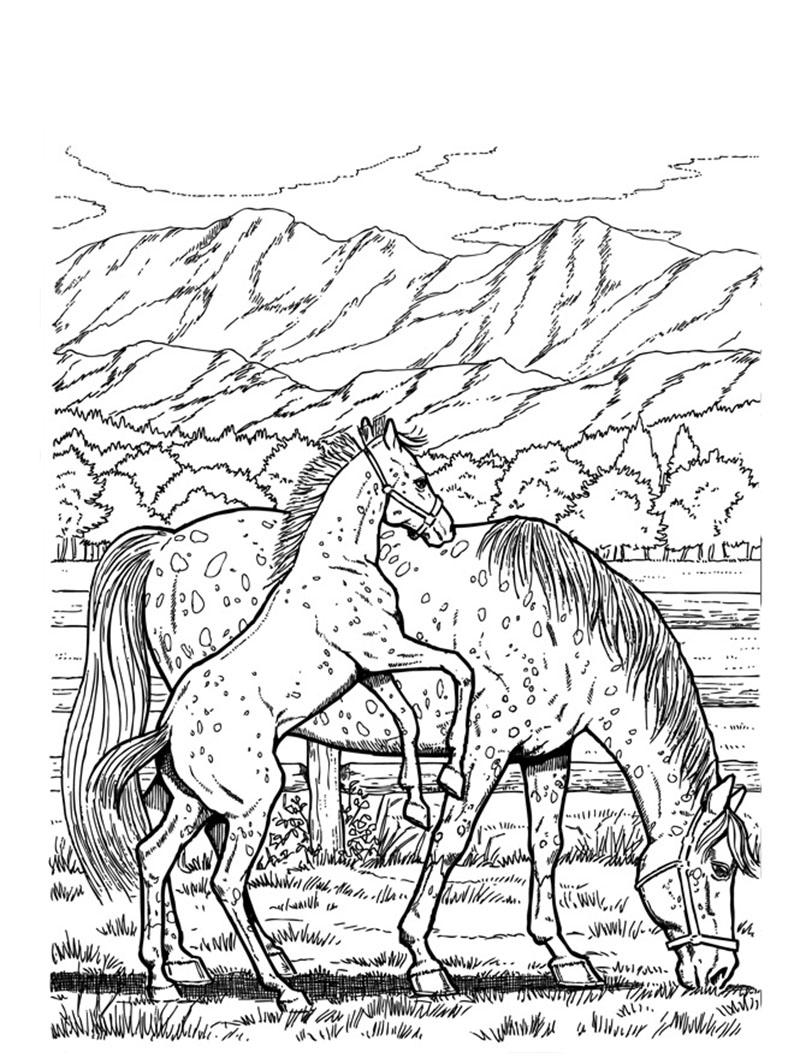 bilder von pferden ausmalen