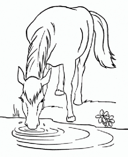 pferd trinkt am flussufer